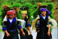 SAPA HARD TREKKING-3 NIGHTS 3 DAYS