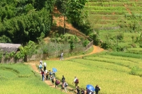 SAPA EASY TREKKING-2 Days 1 Night -By Bus